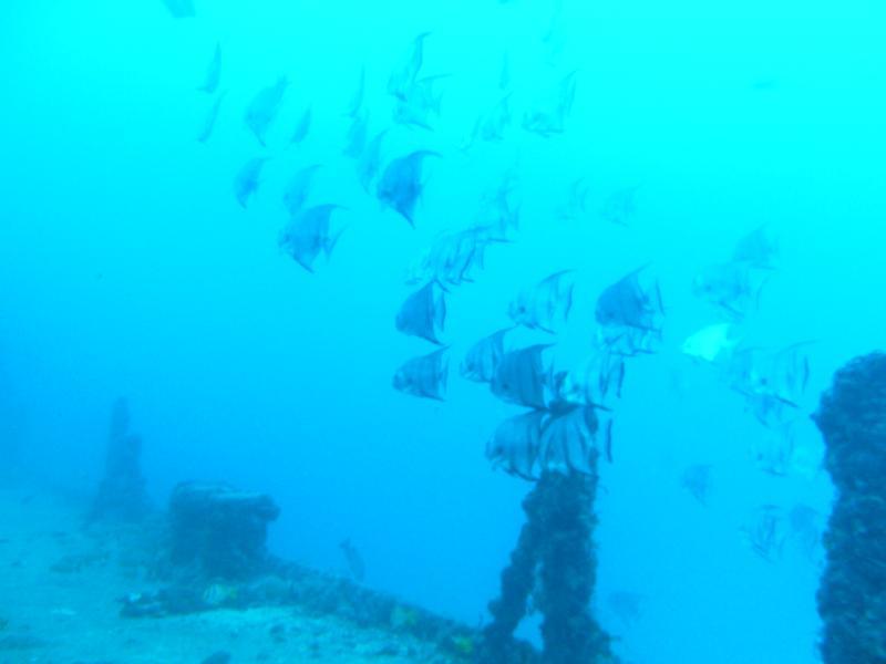 USCG Duane Wreck - Key Largo, FL - 120'