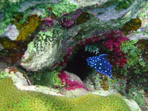Bonaire Blue Fish