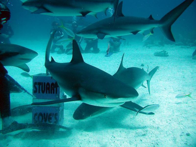 Feeding time at Stuarts Cove