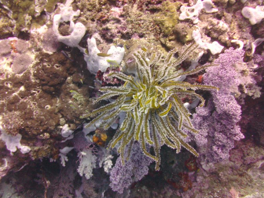 Feather Star at Medicare South Southern Leyte