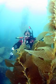 me in the kelp