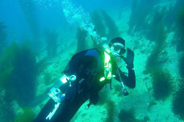 Diving - 2