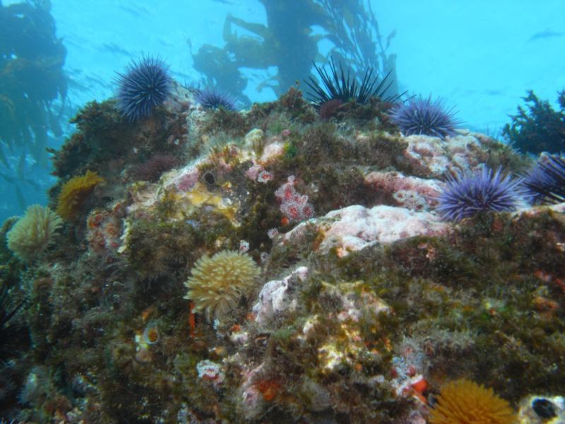 Anacapa Island - 1-9-10