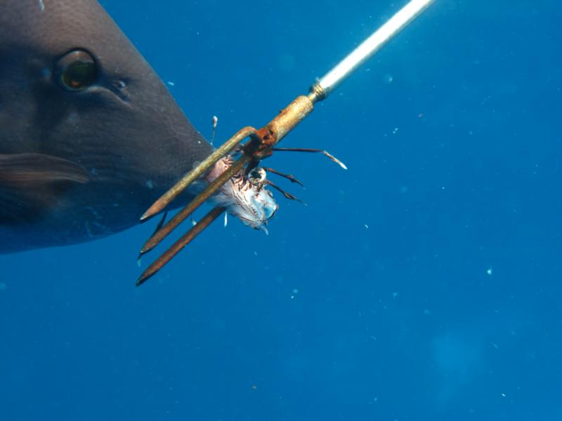 Feeding him a Lionfish (Cozumel)