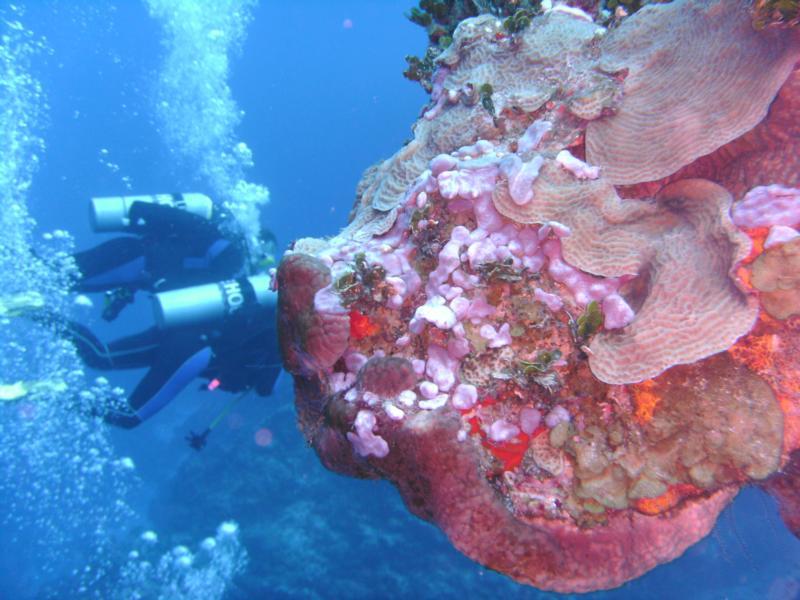 Columbia Coral Pinnacles [Cozumel]