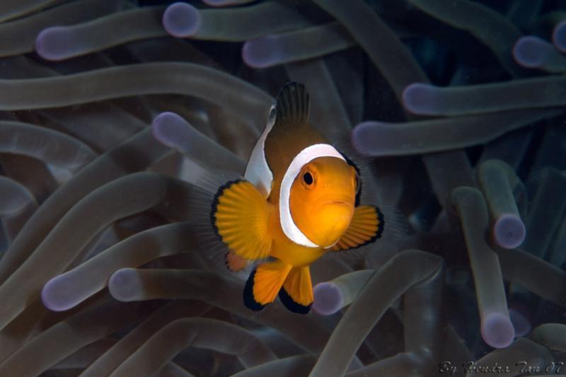 Nemo...