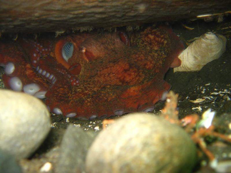 First Octopus Encounter :)