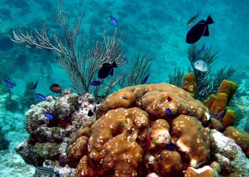 Sunset House Reef - Grand Cayman