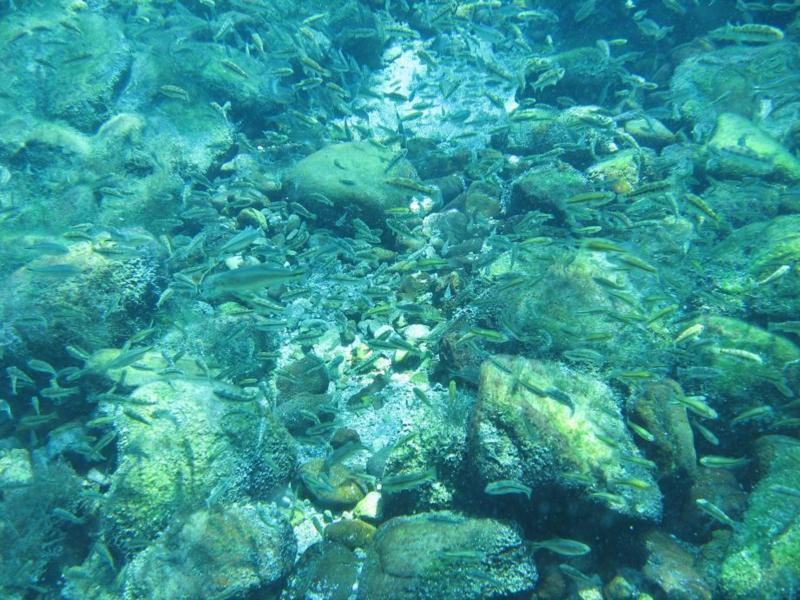Balmorhea - 2010 dive