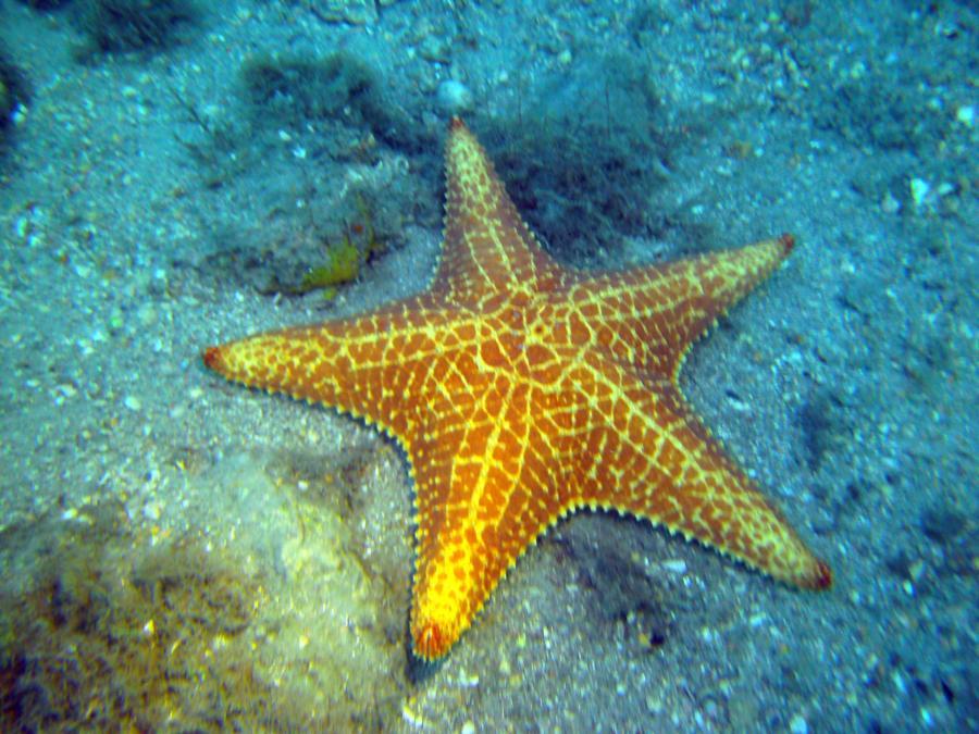 Love these giant starfish