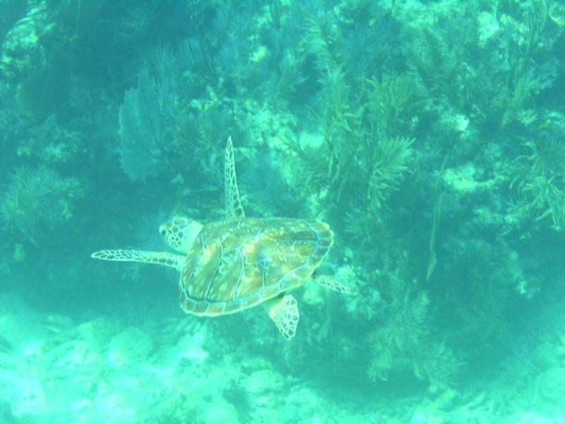 Turtle-Key Largo