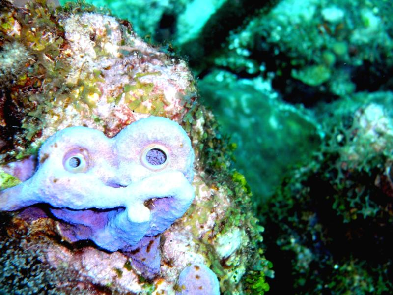 Smiley Reef