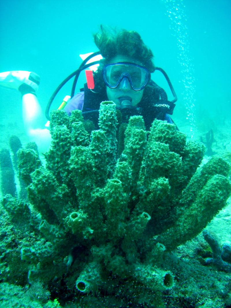 Tube Sponges Fort Lauderdale Florida
