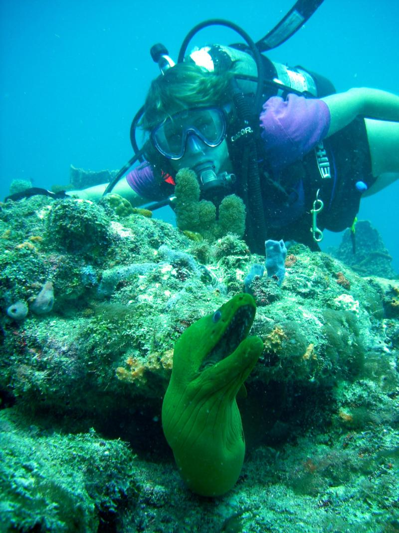 Moral Eel Ft Lauderdale Florida Scuba Diving