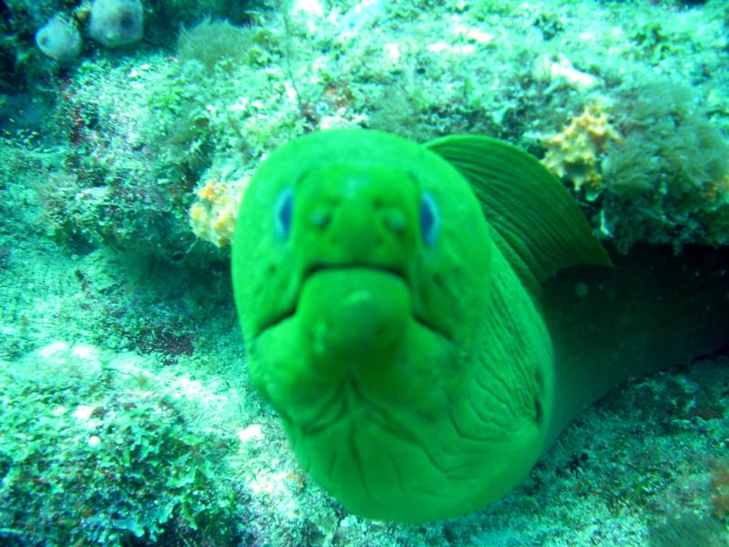 Moral Eel Miami Florida Scuba Diving