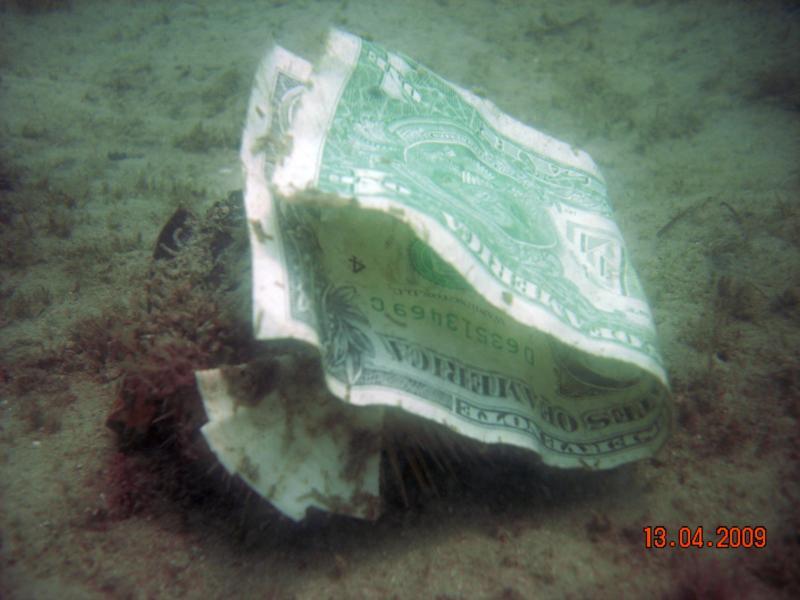 Treasure Underwater Boca Raton Florida Scuba Diving