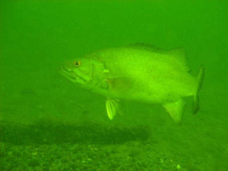 ma bass, rock lake