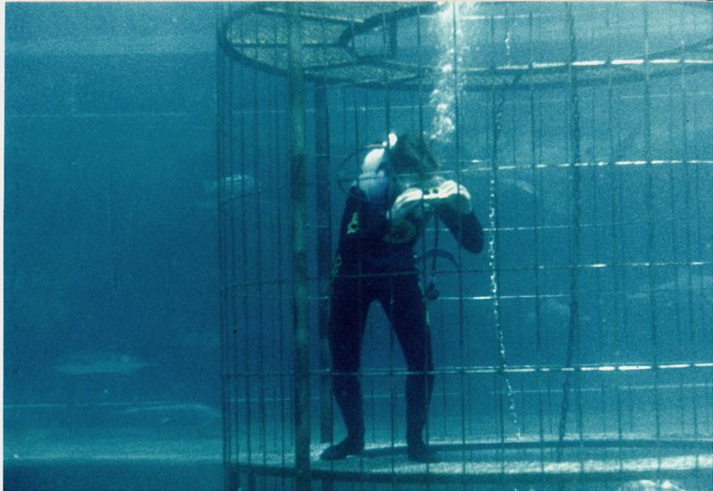 Me in the shark cage at Marineland 1985
