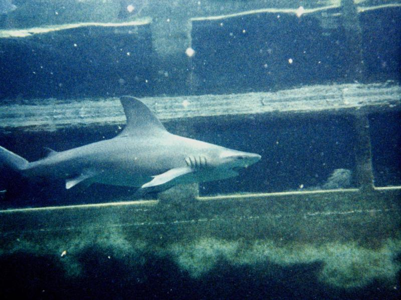 Marineland '85 This was the main fish tank orginally. Turned into shark tank last couple years open.
