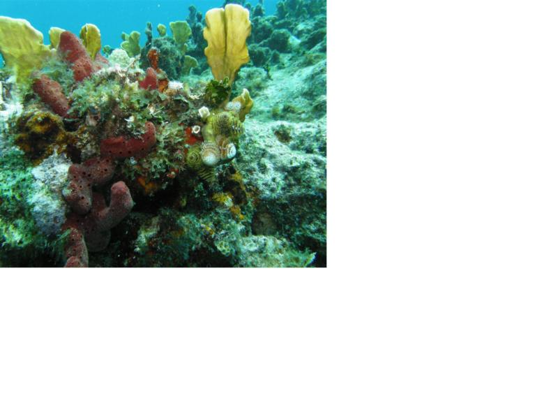 Lee,Florida,coral