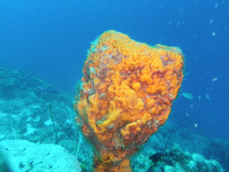 Sponge Cup