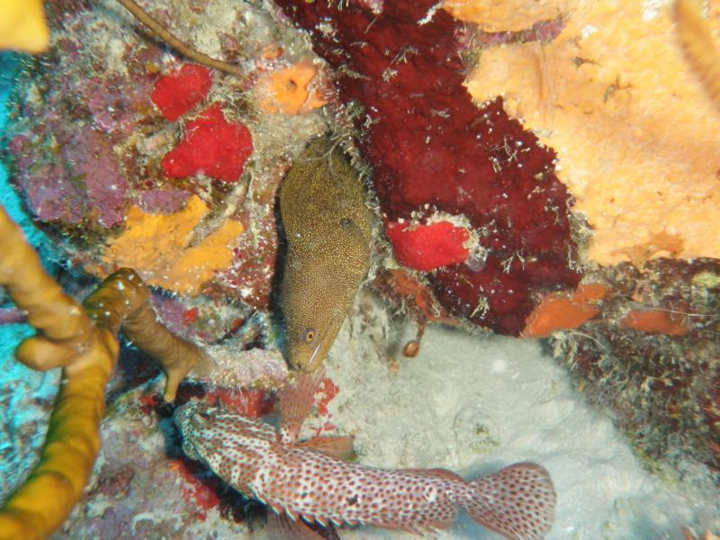 Bonaire Eel