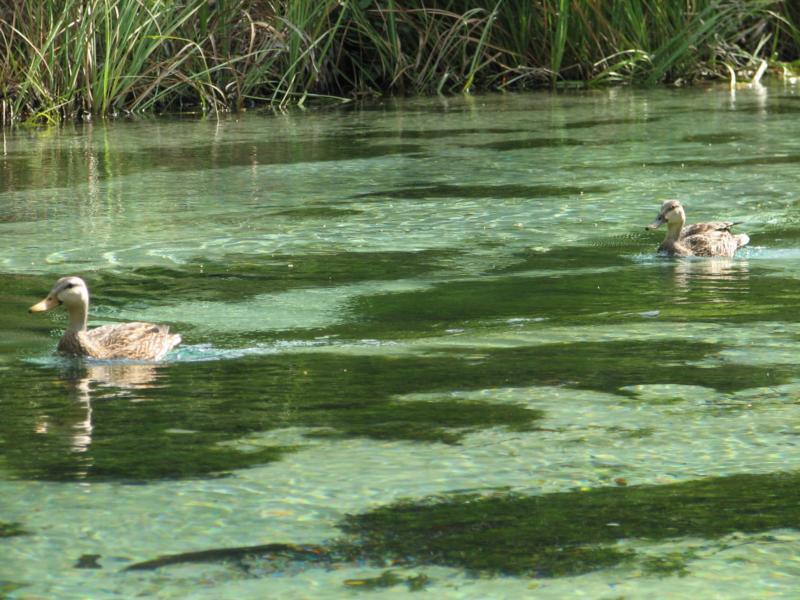 Weeki Wachee river, Fl.