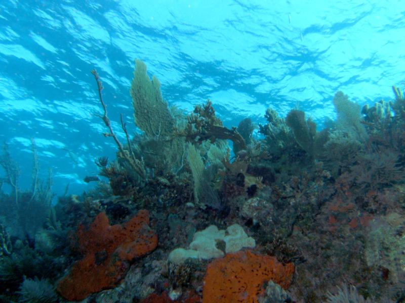 Molasses Reef, Key Largo, FL.