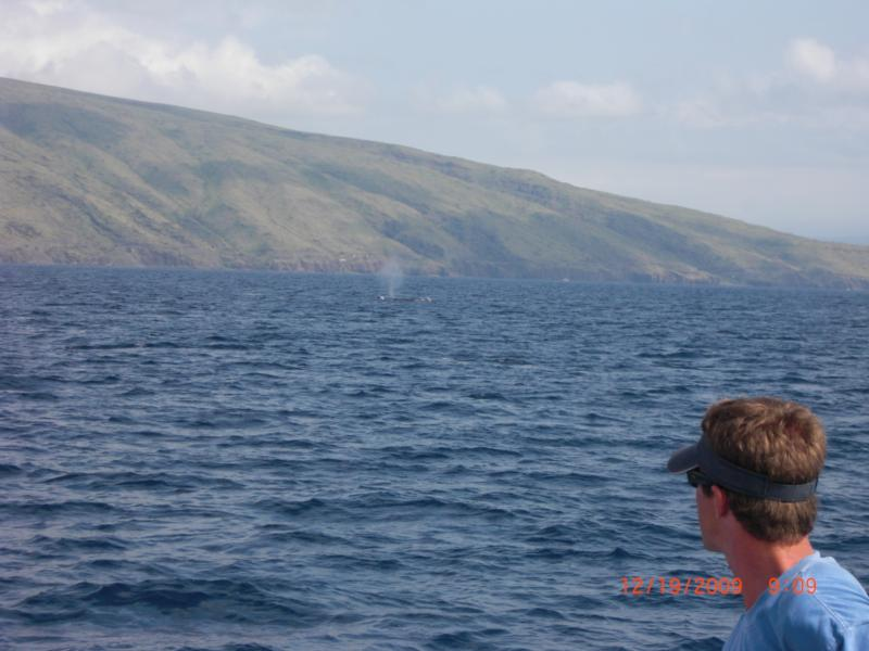 Whale sighting on Dive expedition off of Maui, 2009.