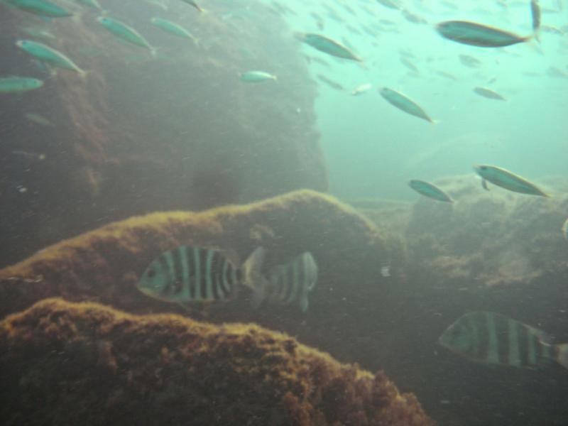 Fish in Panama City