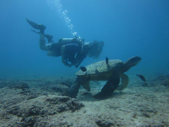 Sea Turtle, KoKo Craters