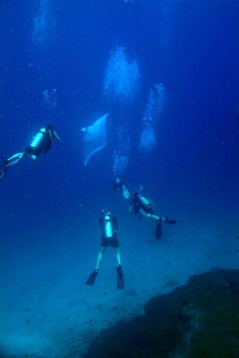 Manta Ray @ Koh Bon, Andaman Sea , Thailand
