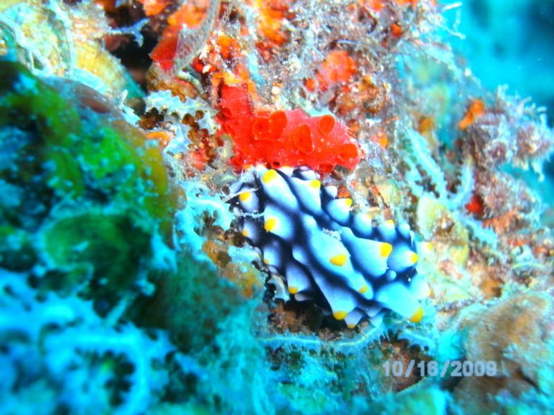 nudi in Fiji