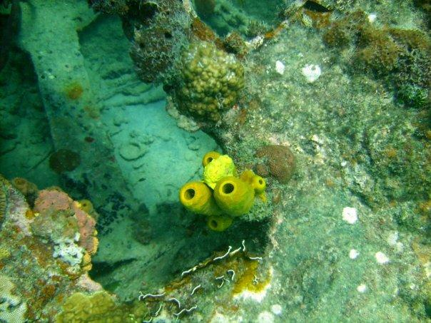 Barbados (Frog Fish)