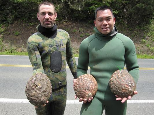 more ten inch abalone