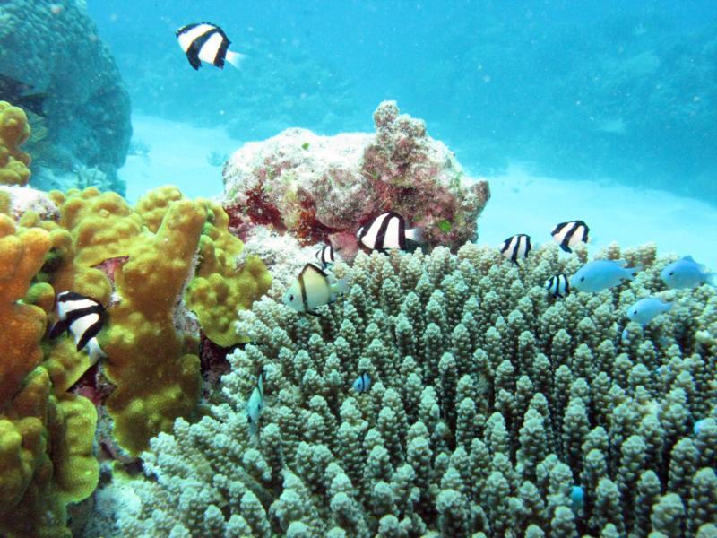 Panda Fish and Coral