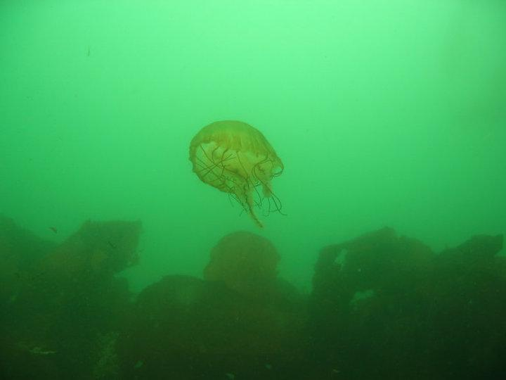 Jelly @ breakwater, Monterey