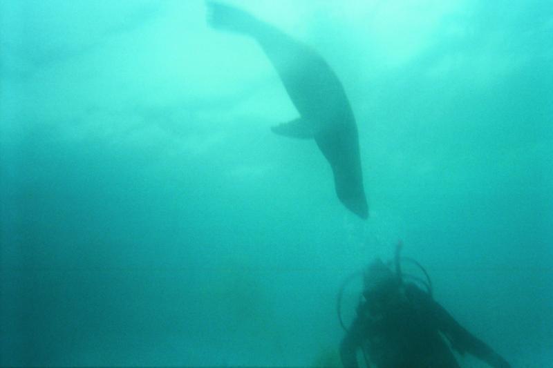 Sea Lion Rookery SB Island 7/09