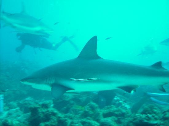 """Is a shark considered """"friendly"""" when you can exit the water with all your limbs?"""
