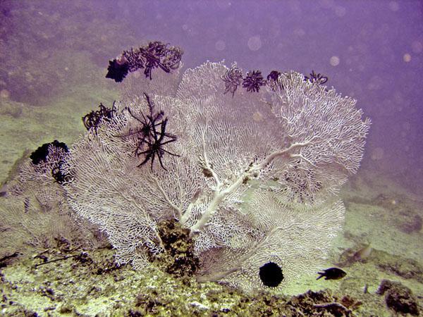 Corals2