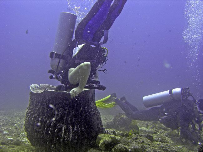 Coral Attack
