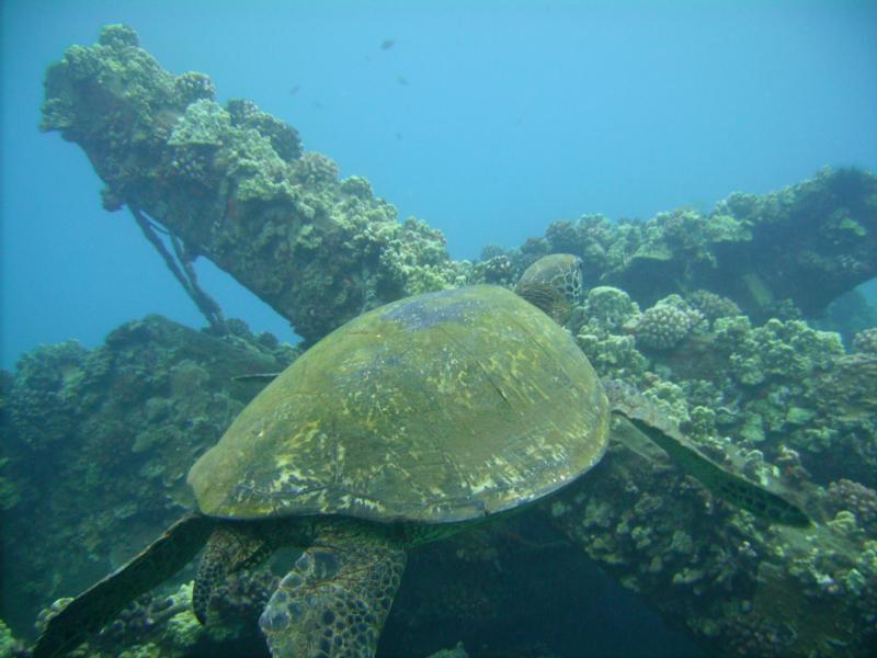 Turtle, Hawaii