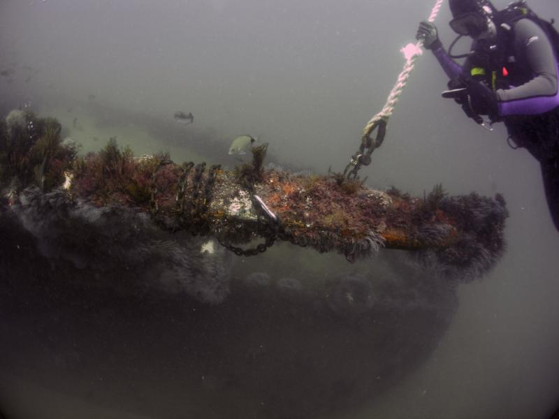 GoldFinch Reef, Myrtle Beach, SC