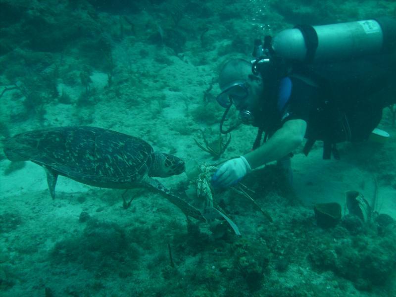 sea turtle, St. John, U.S.V.I.