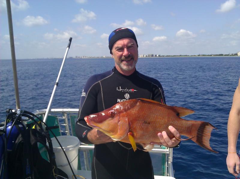 """25"""" Hogfish"""