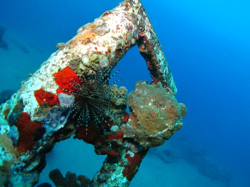 St. Anthony Wreck