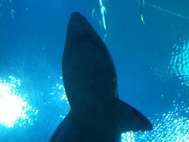 Ga. Aquarium