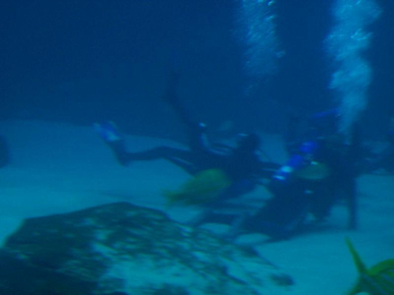 GA. Aquarium 2-13-11