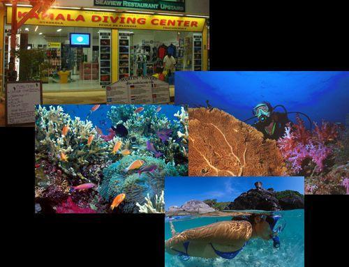 Phuket Dive Shop - Merlin Divers, Kamala, Phuket - Thailand