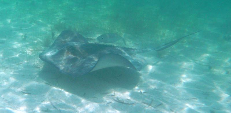 Paradise Cove, Grand Bahama Island, Bahamas